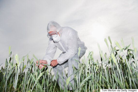 GMOs: What Are They, The Risks And Where Do We Find