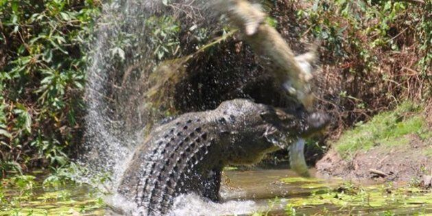 These Terrifying Pictures Of Two Crocodiles Fighting Confirm You Need To STAY