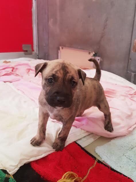Rescued puppy, cuteness