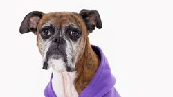 These Dog Models Might Be The Best Thing About American
