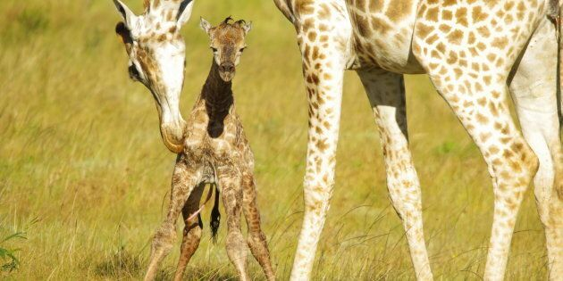 The cute factor isn't the only thing you'll get on safari.