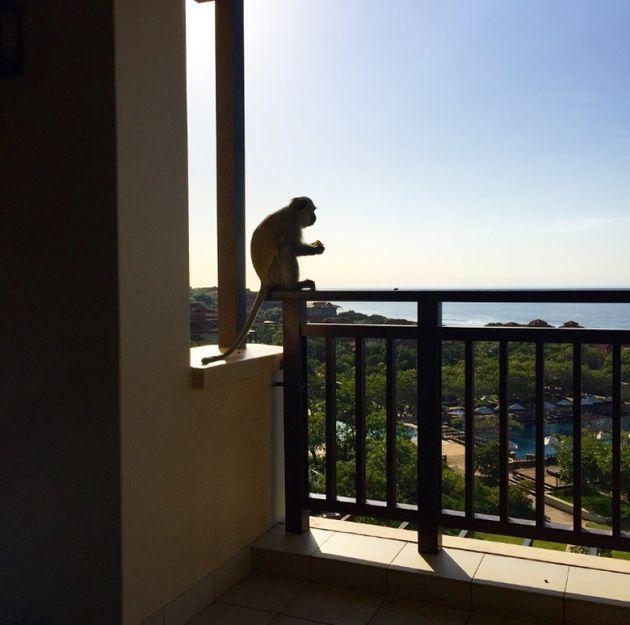 Monkey see, monkey