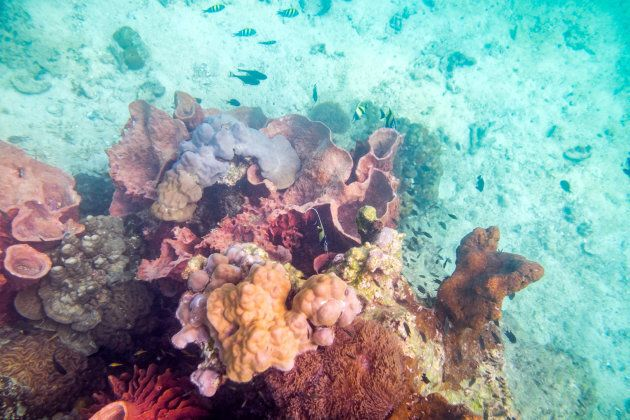 The Great Barrier Reef is home to a third of the world's species of reef.