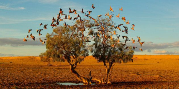 Award-Winning Ecology Photos From The Australian Scientific