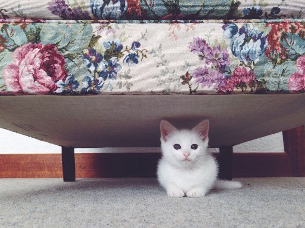 No piece of carpet is safe.