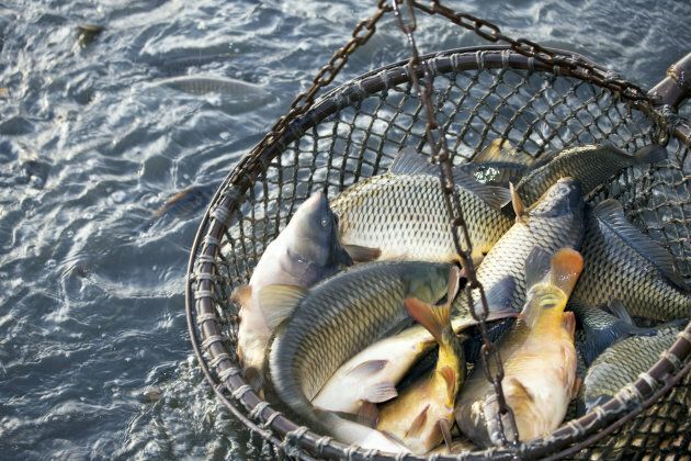 In America, a fifth of all fish on the market has been illegally