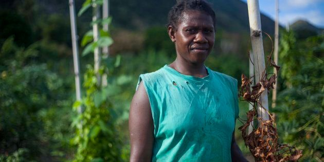 Lewie holds onto the dead leaves and stem of a yam vine. Yam is among the traditional food of Vanuatu, typically eaten every day in every meal. They have been unable to harvest yam this year due to longfella drae taem (an extended dry time).