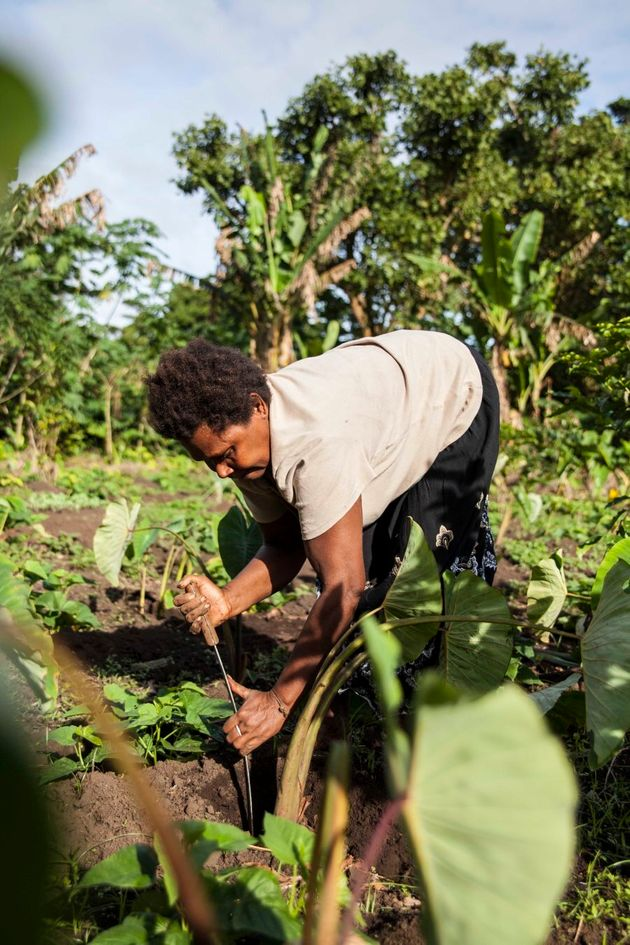 Mother of six, Flora, digs in her garden for Taro ahead of that night's dinner. The women of Vanuatu...
