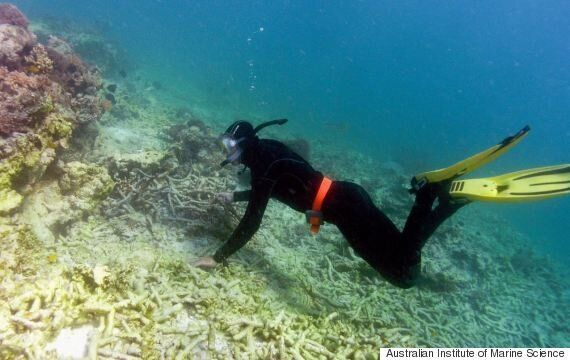 Great Barrier Reef Fishing Bans Mean Coral Bounces Back Faster After