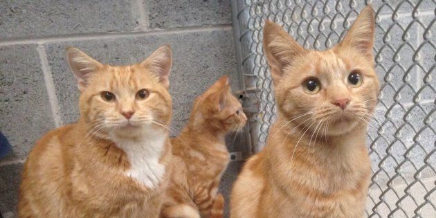 These gorgeous cats were found abandoned in a house in Burwood and were only saved thanks to a kind neighbour...