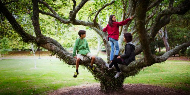 Children and mother climbing tree branches in