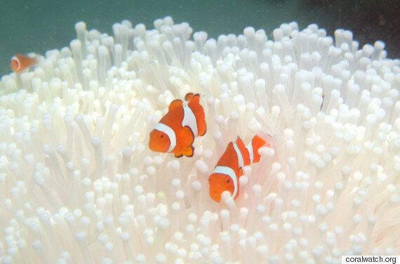 Coral Bleaching: Turnbull And Hunt Should Put Their Faces Underwater And Open Their