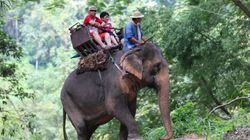People Still Think It's Okay To Ride An Elephant On
