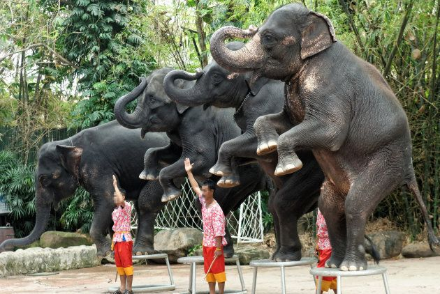 Elephants should not have to perform