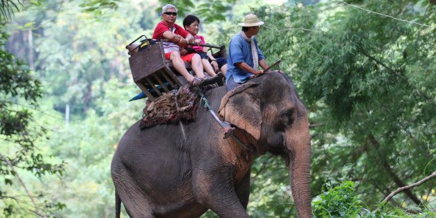 People Still Think It's Okay To Ride An Elephant On Holiday ...