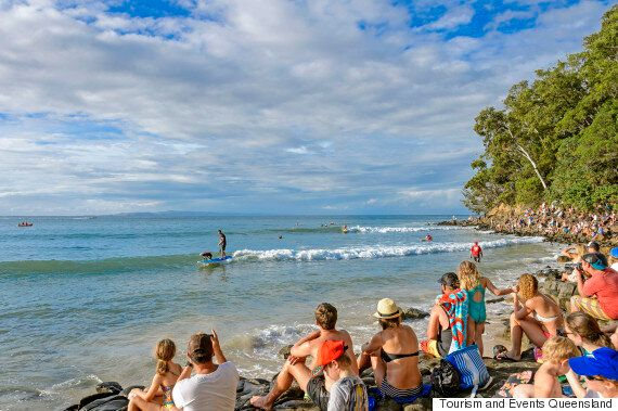 Dogs On Surfboards Are The Best Thing About The Noosa Festival Of