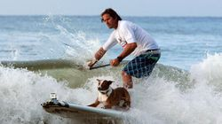 Surfing Dog Pictures. Because You Deserve