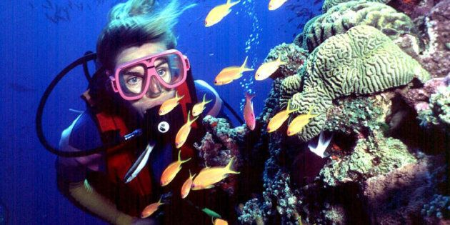 UNESCO has requested Australia accelerate efforts to improve the Great Barrier Reef's water