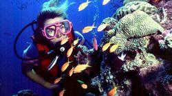 Great Barrier Reef Not 'In Danger' Despite Widespread