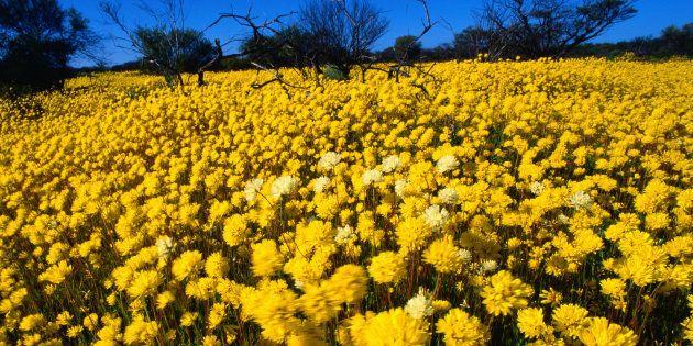Kalbarri National Park, Western Australia, Australia,