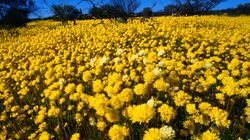 Wildflower Season Turns The Desert Into An Instagrammer's