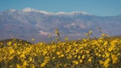 Death Valley Is Having A Rare And Magical 'Super