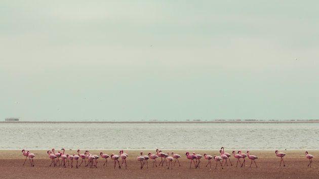 Namibia: Sandwich