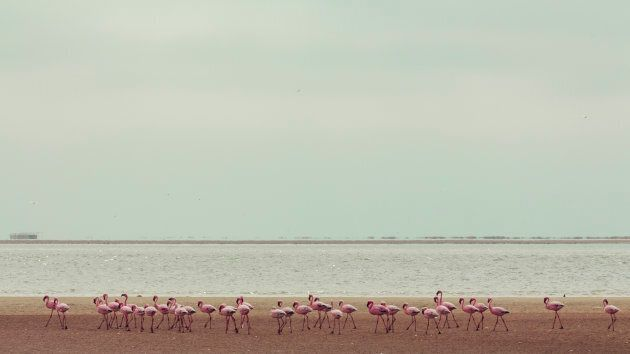 Namibia: Sandwich Harbour
