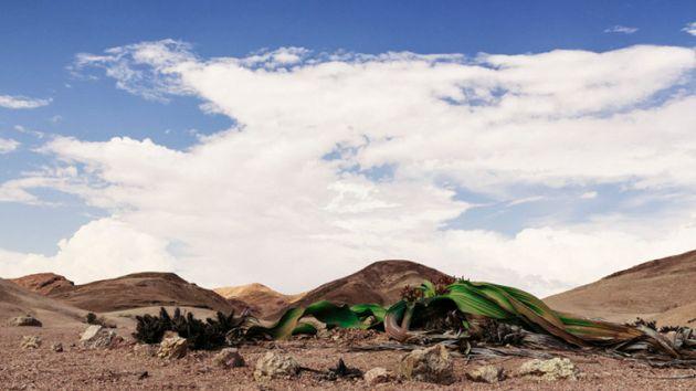 Namibia: The