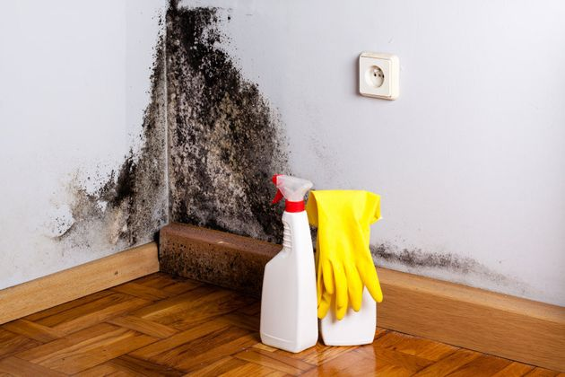 How To Get Rid Mould In Your Home