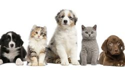Why You Should Never Get A Cat Or Dog From A Pet