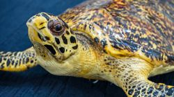 Alleged Thief Takes Off With Stuffed Turtle, Sparking Dramatic Citizens'