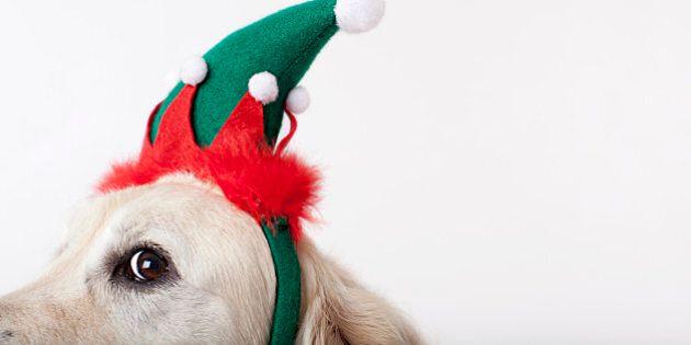Close up of dog wearing Christmas