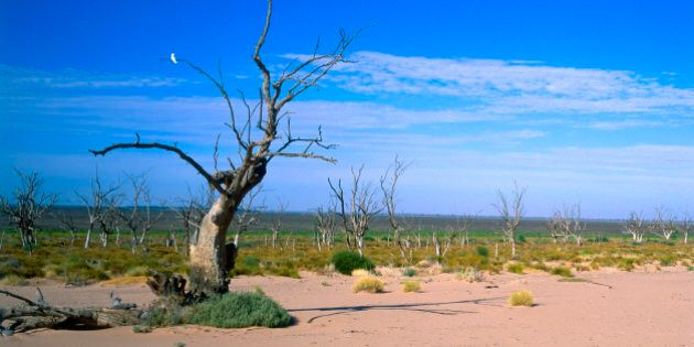 Dead trees in empty Menindee Lakes, New South Wales,