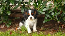 An Important Guide For Pet Owners: Which Plants Are Toxic To Cats And