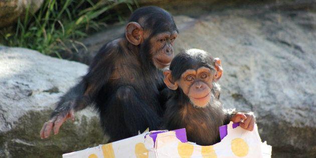 Taronga Zoo Animals Open Presents, Tuck Into Christmas