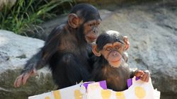 Cute Zoo Animals Open Presents, Tuck Into Christmas