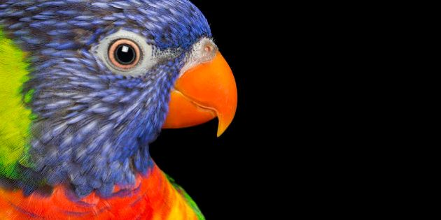 The Colourful Quirky Beauty Of Rescued