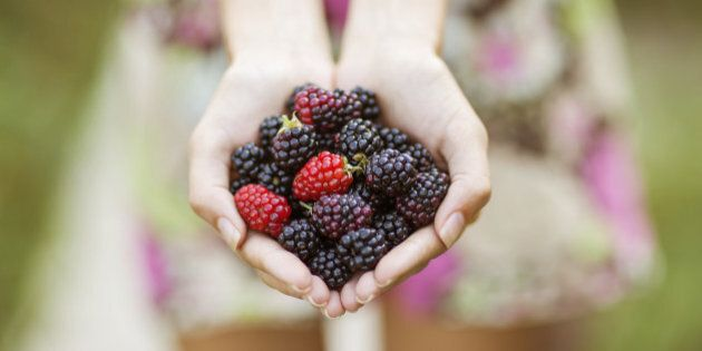 Female hands hold in the palms of ripe blackberries.
