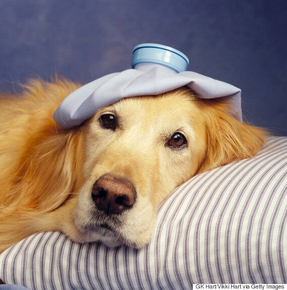 This Online Pet Business Allows Dogs At Work And Provides Sick Leave To Look After Ill