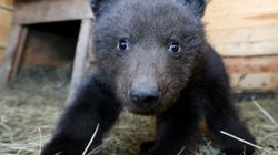 Cops Free Hapless Bear Cub From A Sticky