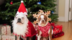 These Pet Gifts Will Get Your Fur Babies In The Christmas