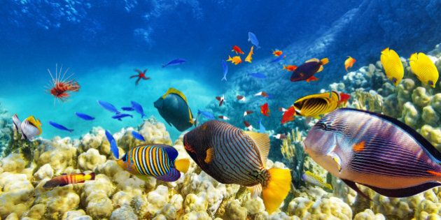 Wonderful and beautiful underwater world with corals and tropical