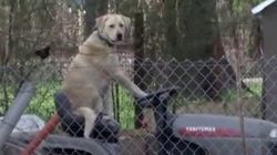 World's Chillest Dog Rides Out Storm Aftermath On A Lawn