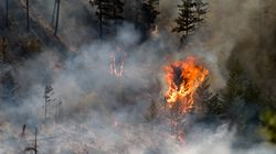 Canada Wildfires: Williams Lake Evacuated As High Winds Fan