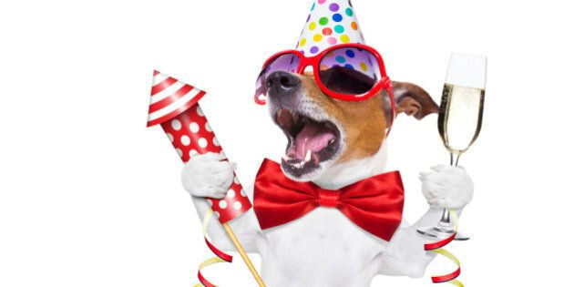 jack russell dog celebrating new years eve with champagne and singing out loud, with a fireworks rocket...