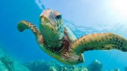 Turtle Plastic Study: Sometimes You Don't Want To Be Proven