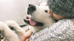 Guy Dumps Girl, Says He 'Hates' Her Dog, Provokes Twitter's