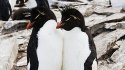 Proof Penguins Are The Most Romantic Creatures On
