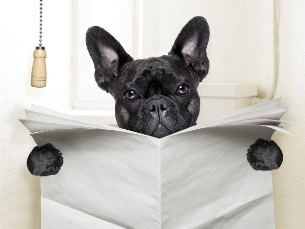 Dogs can pass roundworm eggs into the soil through their faeces.